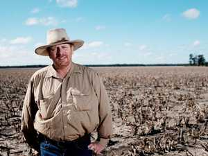'Desperately looking at the sky': farmers hope for rain