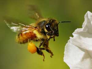 Big threats identified for tiny pollinators
