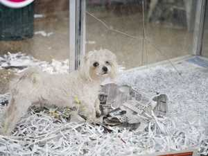 Pets Galore owner responds to RSPCA raid and animal seizure