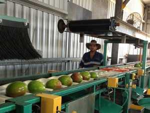 Technology a game-changer for Bowen Mango farm
