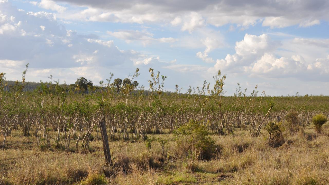 NOT THE OUTBACK: The State Government has explained why the North Burnett was not classed as an outback area. Picture: Emily Smith.