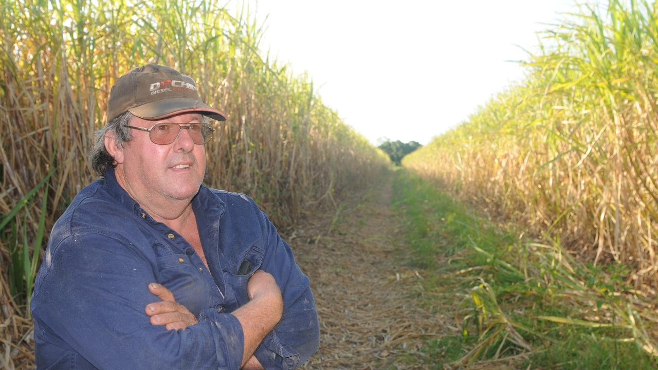 Bundaberg Canegrowers chairman Allan Dingle was concerned the addition of AgForce Cane would send mixed messages to the government. Picture: JAMES WAGSTAFF