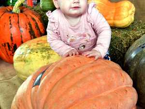 Giant pumpkin contest for Fraser Coast Show - 13 mth