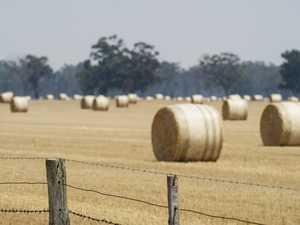 Rainfall brings reprieve for hay, fodder demands