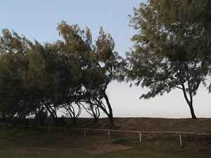 Harbour resident accused of illegally felling trees