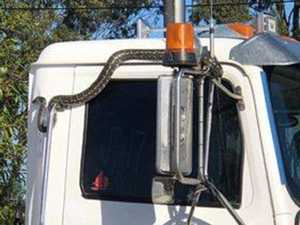 Truckie finds snake on B-double while driving 100km/h