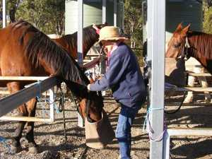 Help provide special horses with continual care