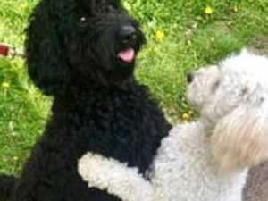Adorable moment dog siblings reunite