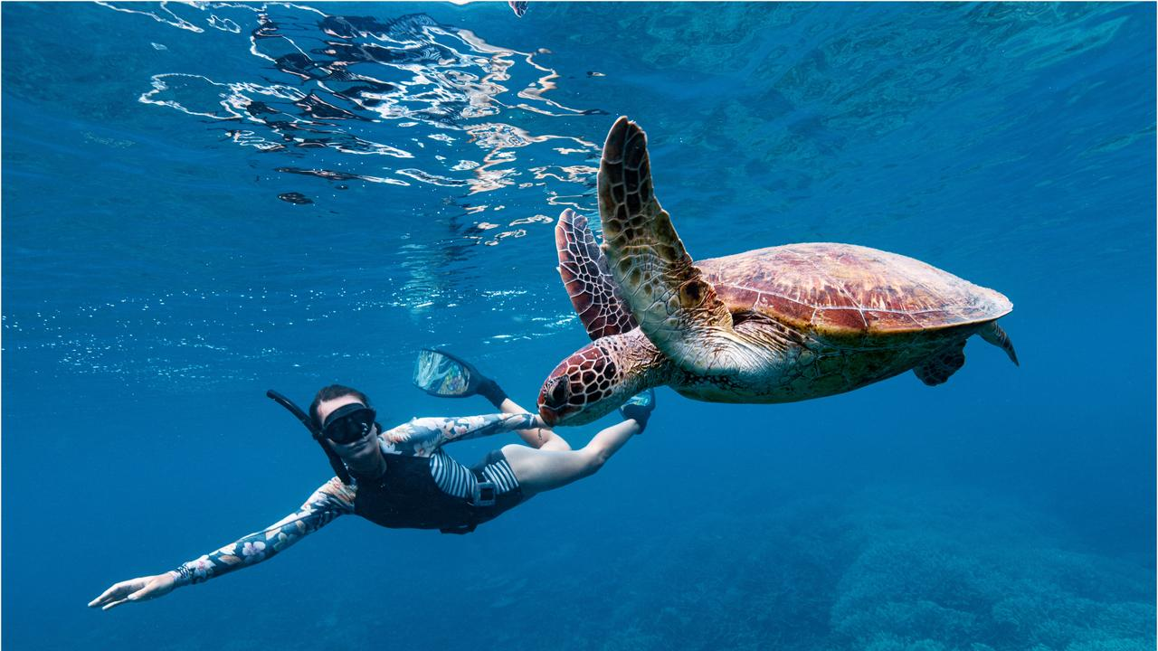 Brooke Olive swimming with turtles, Lady Musgrave Experience