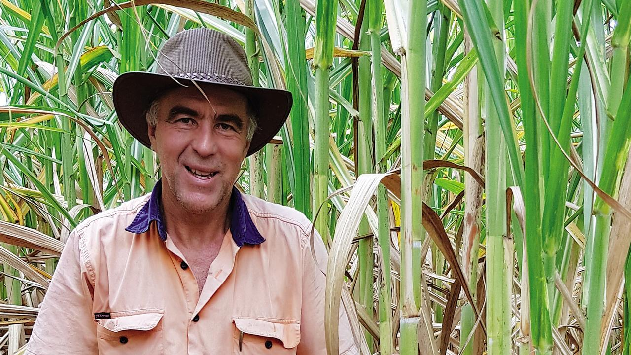 'GOOD PROMISE': Cane farmer Bryce Cronau saw the new variety being grown in trials.