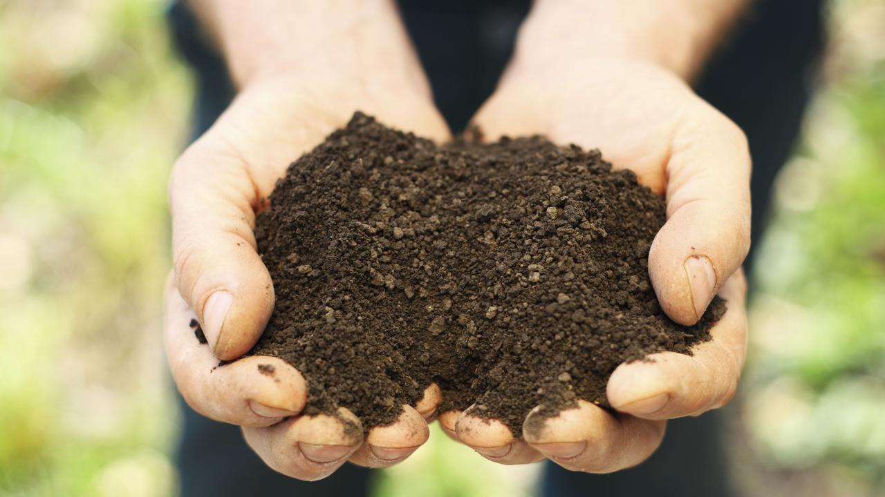 Soil in human hands.