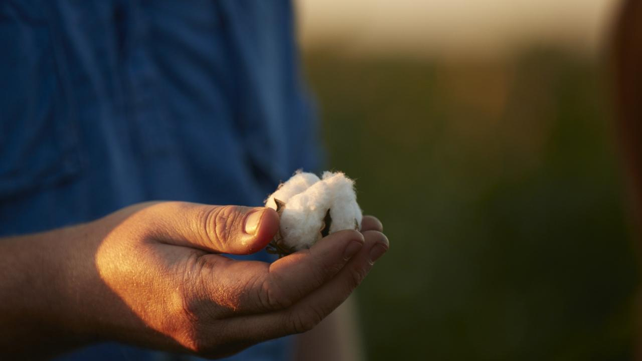 COTTON BOOST: Dalby cotton farmers will receive a boost thanks to the Smart Farms Small Grants program