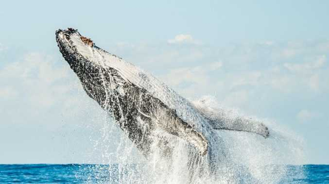 Whale watching tour operators face uncertain season