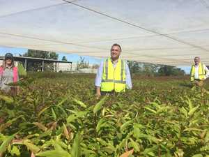 Clarence nursery to double in capacity