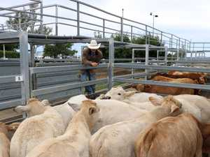 Above average cattle prices spark new sale plan