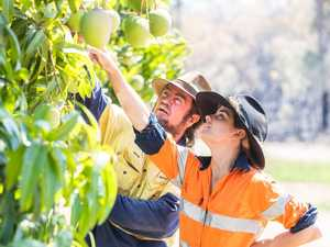 Rich supply of seasonal pickers as demand peaks