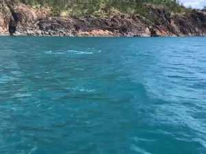 Whale wows Whitsunday skipper