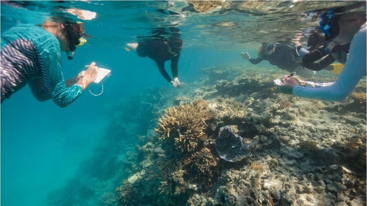 CITIZEN SCIENTISTS: Lady Musgrave Experience recently selected the next round of reef keepers to participate in this year's program.