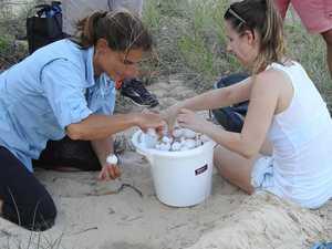 More hatchlings survive 2020 turtle season
