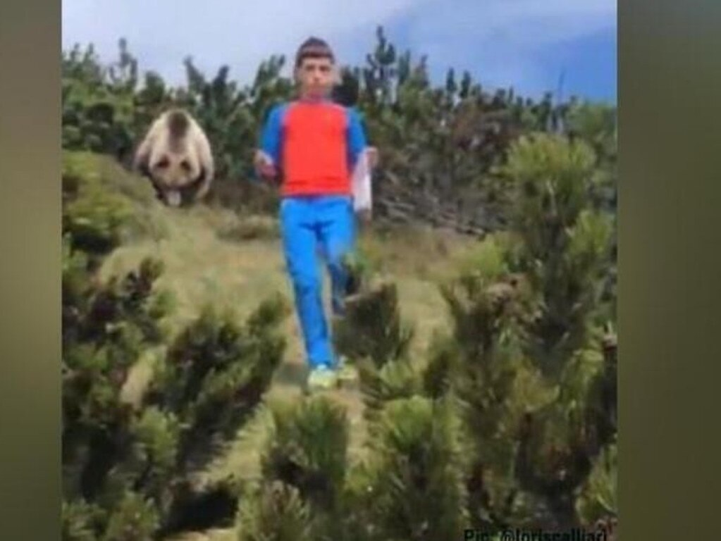 The bear stalked the young boy as he hiked with his family. Picture: Loris Calliari