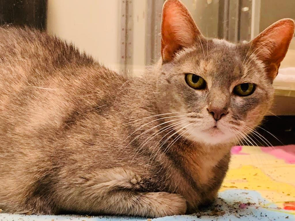 A cat has done more travelling than most of us in the last two months after her owners pulled out all the stops to get her from America to Australia.