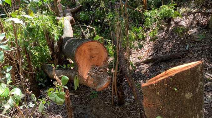 Council's revenge on Shoal Pt vegetation vandal