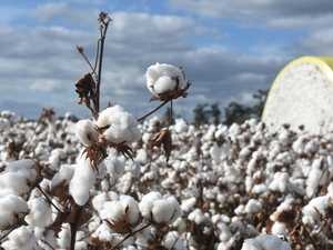 Cotton industry responds to $50k grants program