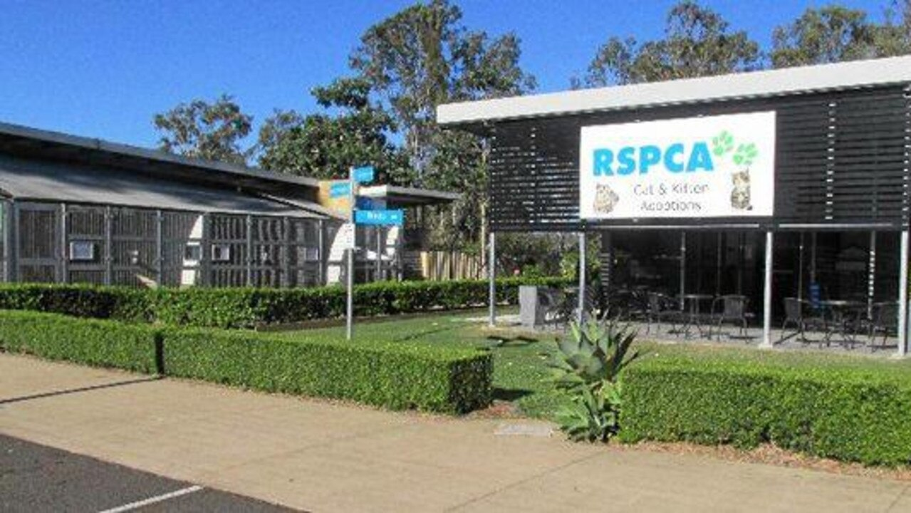 RSPCA Gympie had an influx of inquiries and virtual adoption screenings.