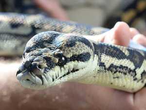 Man in hospital after suspected snake bite