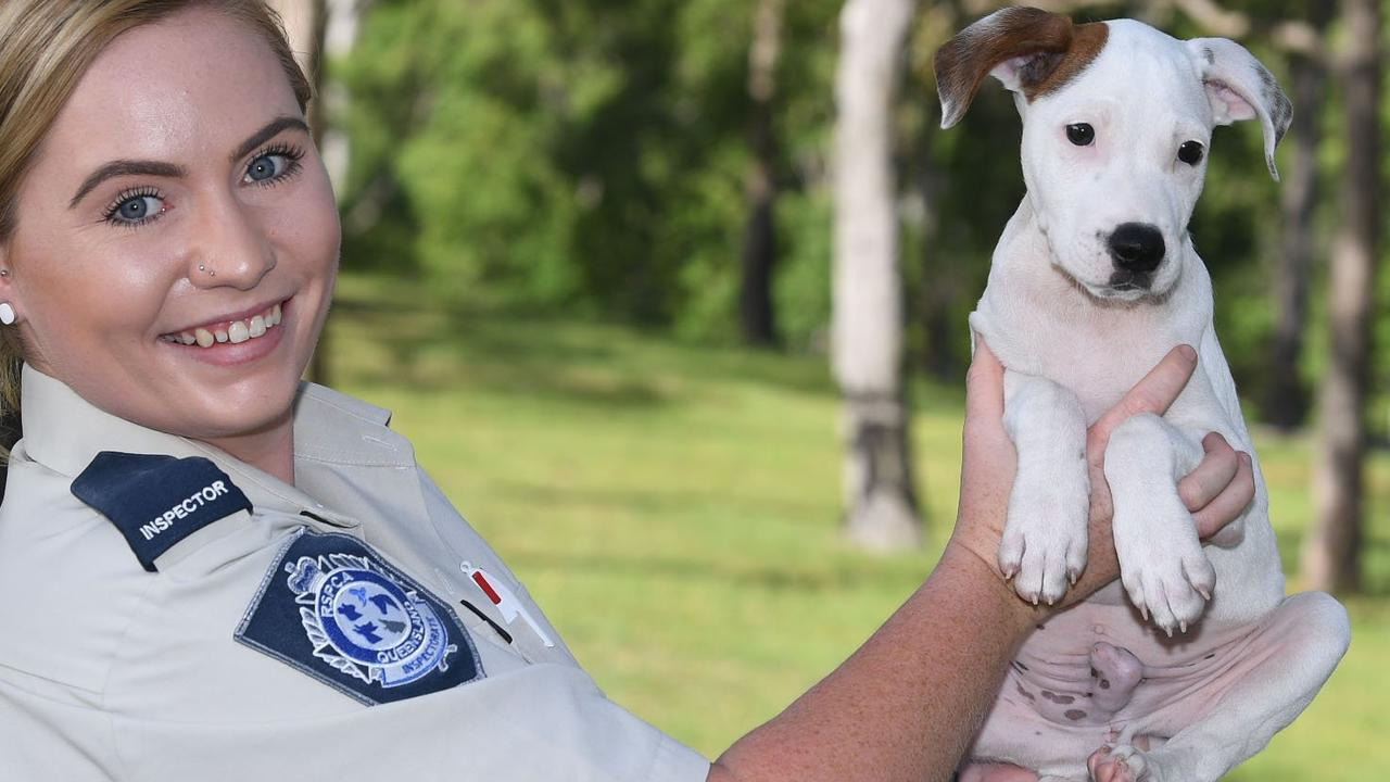 RSPCA Inspector Jema Rossow has had 40 cases since March. Picture: Shane Zahner