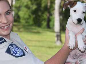 COVID's cruel twist for Gympie animals