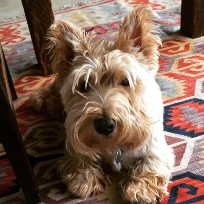 Poh's much-loved dogs are a fixture on her social media. Picture: Instagram.
