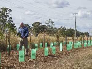 Corridor planted next to solar farms