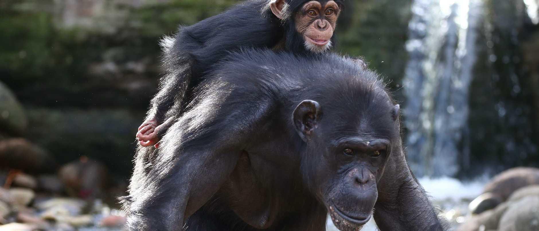 Sat Taronga Zoo