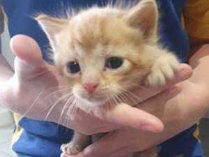 HEARTBREAKING: Dumped kittens left to fend for themselves