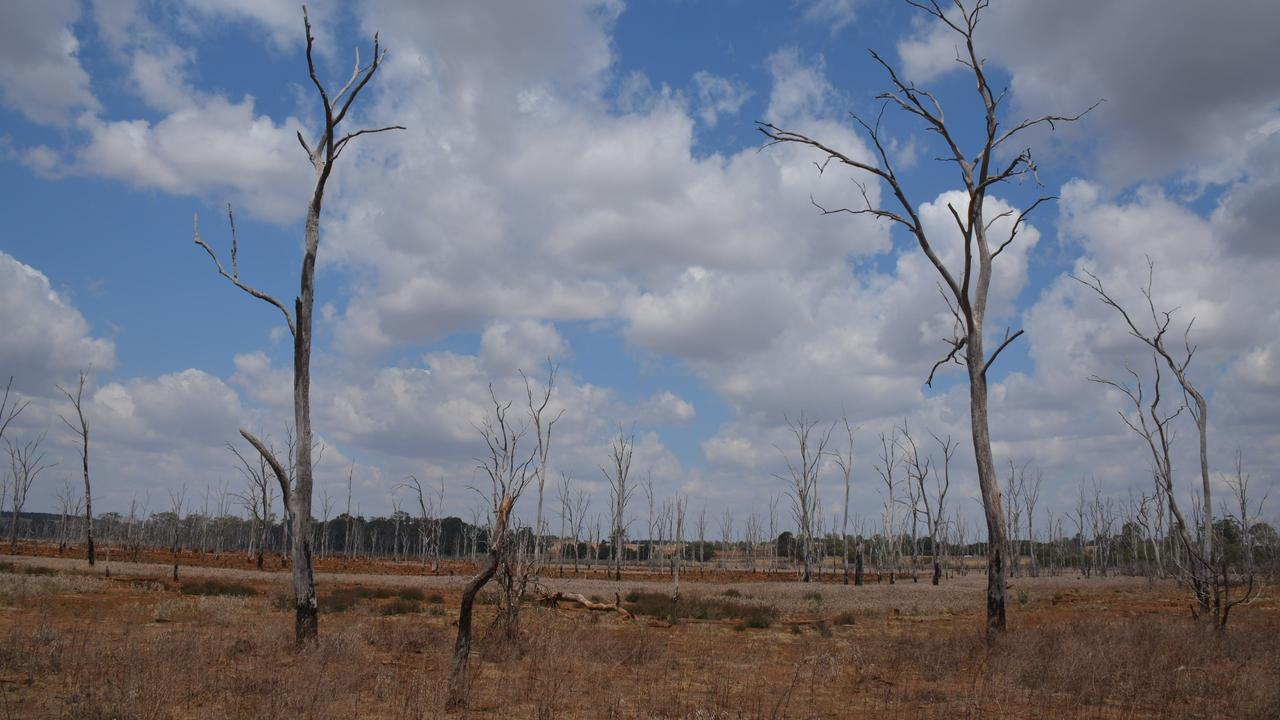 VAST: The Wooroolin Wetlands is mostly a dry open space the with occasional waterhole. (Photo: Jessica McGrath)