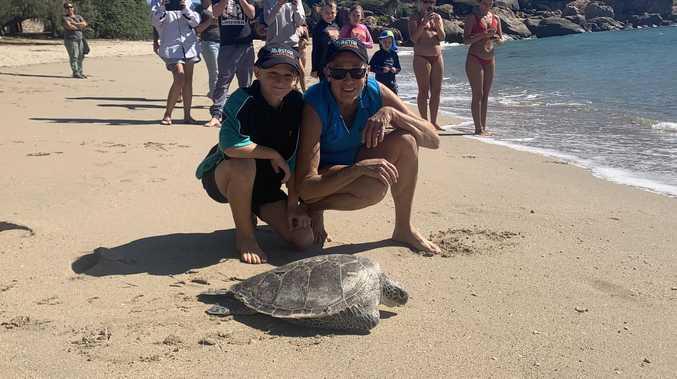 Sea turtle 'Quarantina' out of quarantine