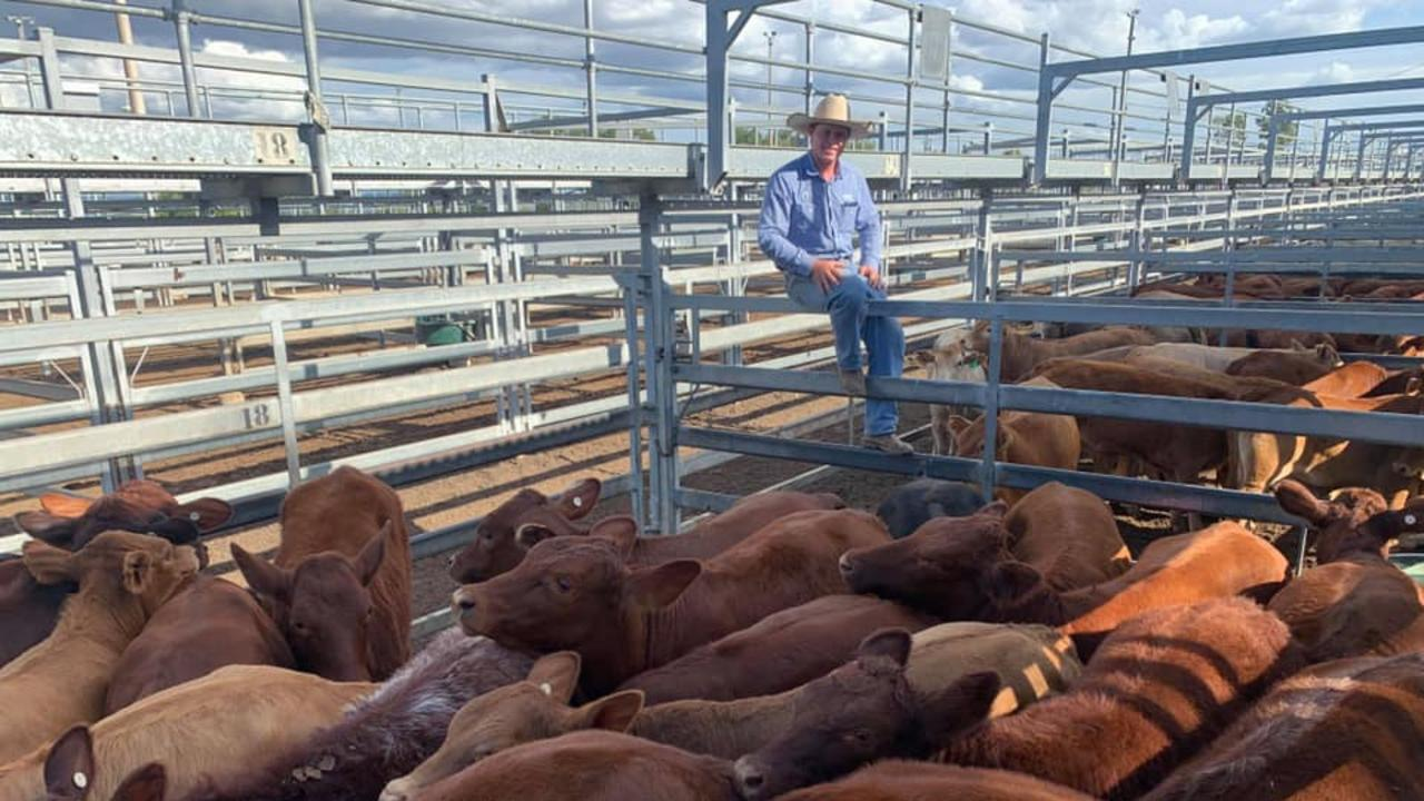 Will Conachan from Savage Barker & Backhouse - GDL, pictured with a pen of Shorthorn-Angus cross heifers sold for 386.2c/kg, averaging 247kg, to make $952/head.