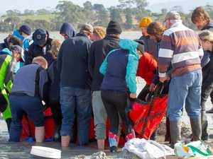 VIDEO: A coastal community came together to save a dolphin