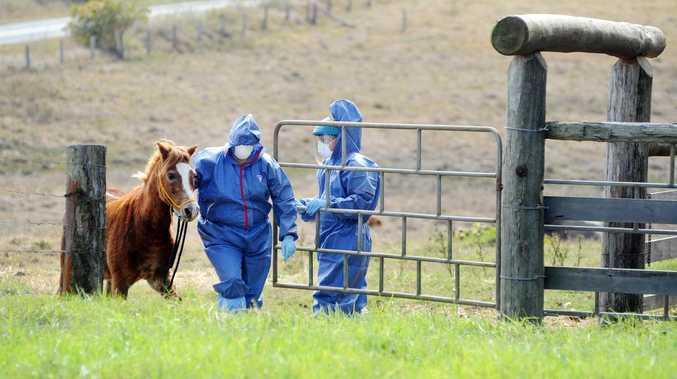 Vet explains life threatening equine virus at Tweed
