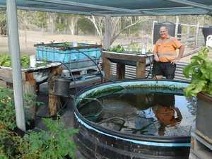 So-fish-ticated way to grow veggies
