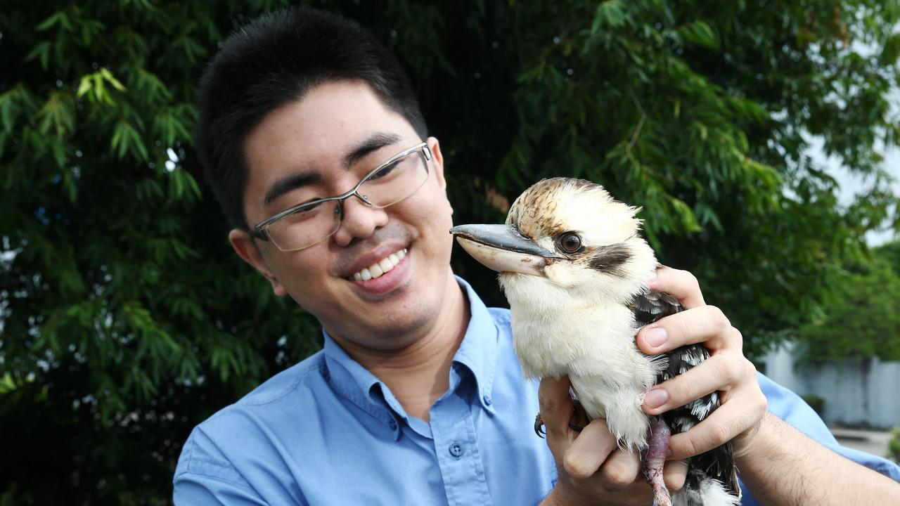 A vet clinic team has performed intricate surgery on the leg of a kookaburra after it came off second best trying to steal some dog food.