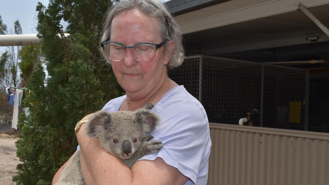 COUNTDOWN TO EXTINCTION: Granite Belt Wildlife president Betty Balch with a baby koala.