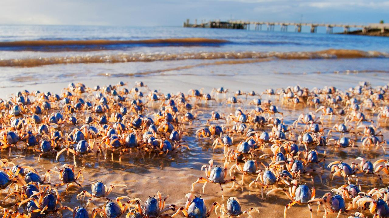 Soldier crabs at Fraser Island. Photo: Kingfisher Bay Resort