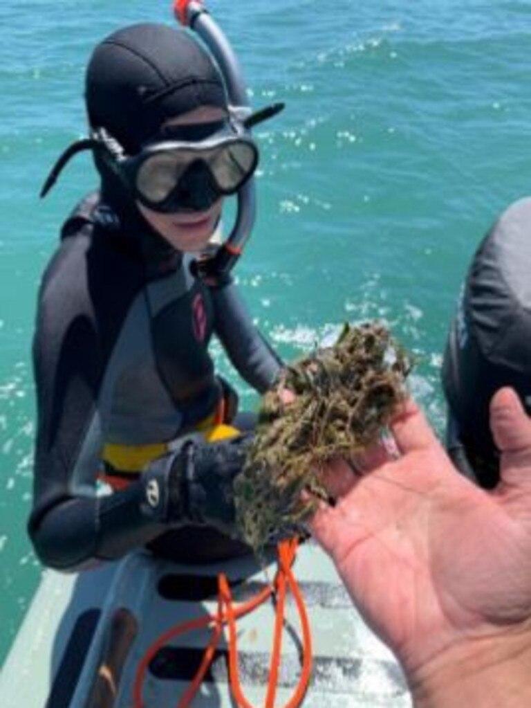 JCU Researcher Katie Chartrand surveying seagrasses in Gladstone.