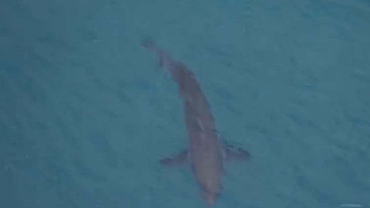 Witnesses said a three metre shark was behind the attack. This shark was spotted at Salt Beach, near the fatal attack, Sunday morning Picture: 7NEWS