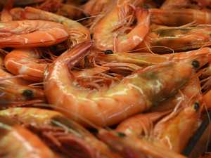 Why you shouldn't use supermarket prawns as bait