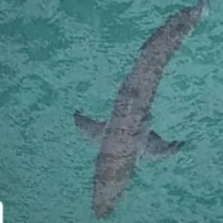 A shark seen off Salt Beach at Kingscliff, where the attack happened.