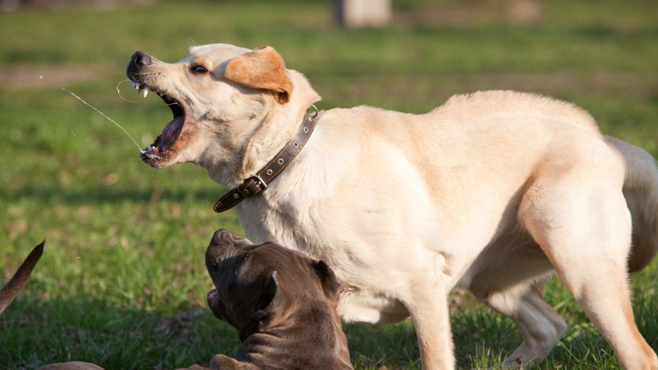 BARKING MAD: Incessant barking dogs and killer cats are plaguing at Lockyer Valley neighbourhood.