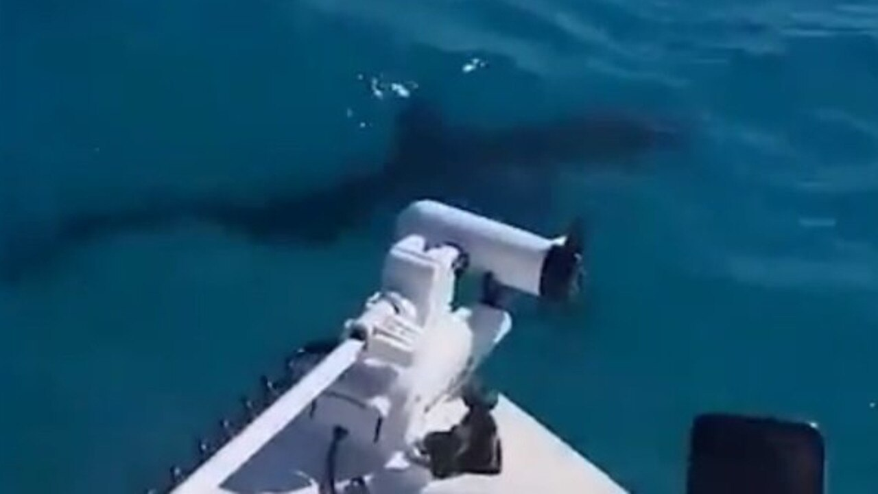 Last year fisherman captured footage of a large Great White off the coast of Fraser Island.